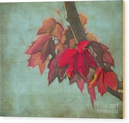 Red Maple Wood Print
