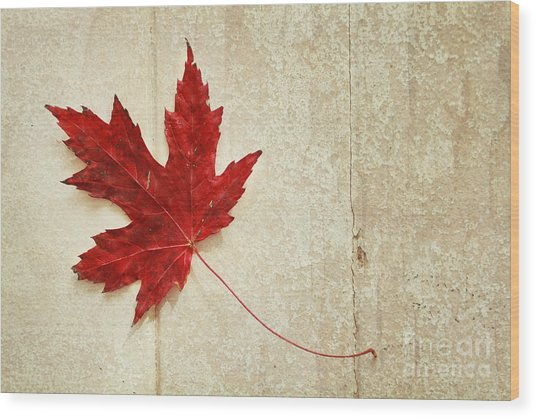 Red Maple Leaf Wood Print by Isabel Poulin