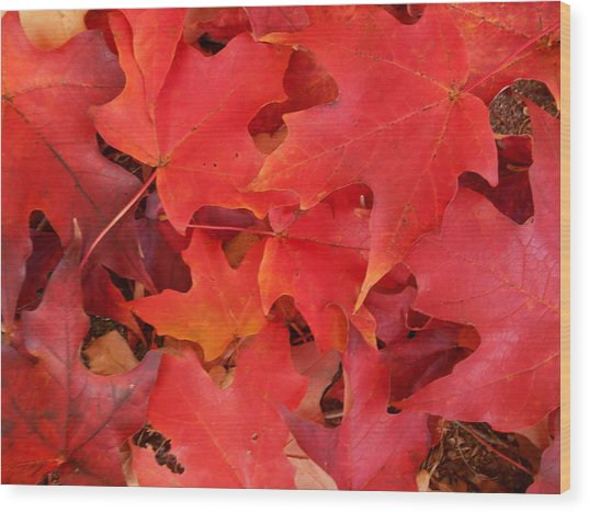 Red Maple Leaves Carpeting The Ground Wood Print