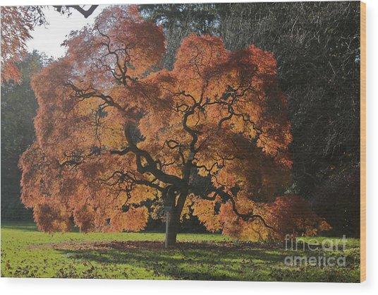 Red Maple Wood Print by Linda Asparro