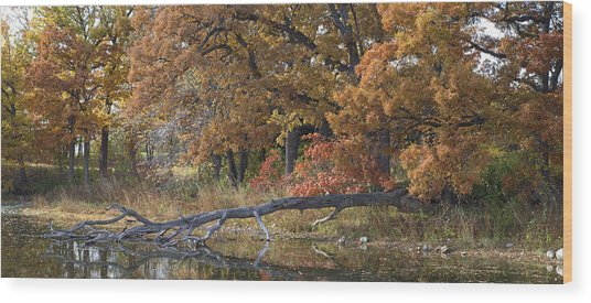 Red Oaks On The Shore Wood Print