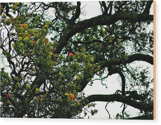 Red Ohia Lehua Tree Wood Print