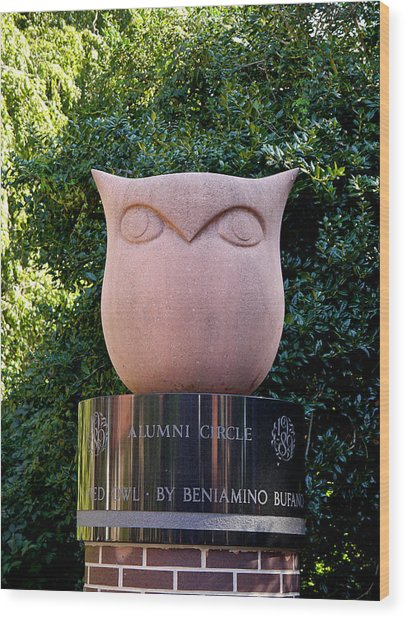 Red Owl At Temple Wood Print