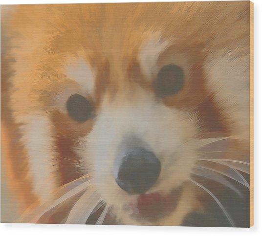 Red Panda Up Close Wood Print
