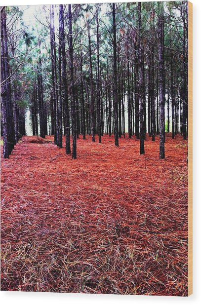 Red Path Wood Print