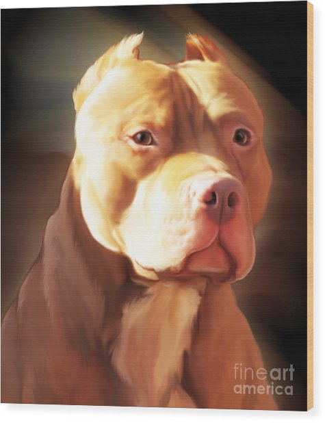 Red Pit Bull By Spano Wood Print
