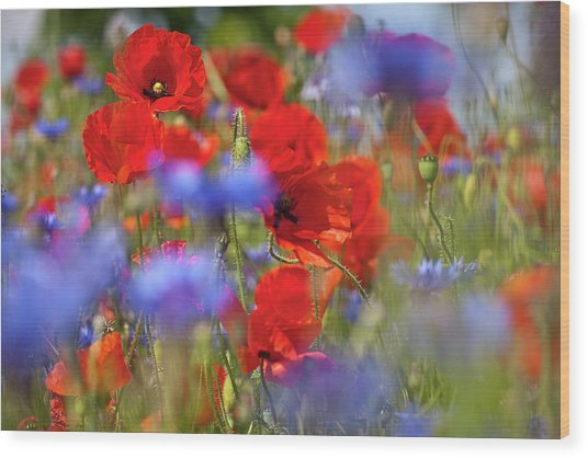 Red Poppies In The Maedow Wood Print