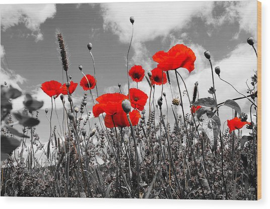 Red Poppies On Black And White Background Wood Print