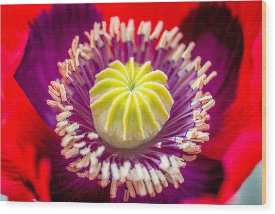 Red Poppy. Wood Print