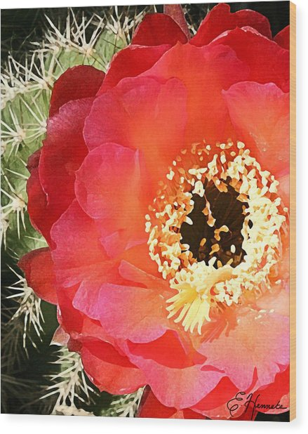 Red Prickly Pear Blossom Wood Print