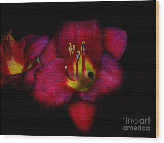Red Red Lily Wood Print
