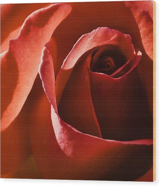 Red Red Rose Wood Print