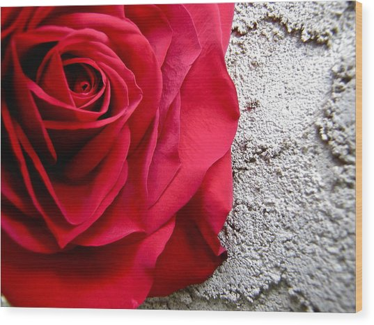 Red Rose On Wall Wood Print