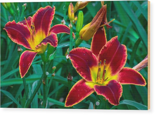 Red Rum Daylilies Wood Print