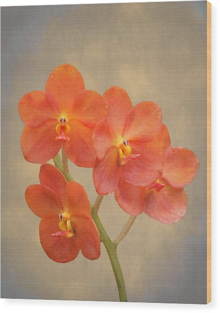 Red Scarlet Orchid On Grunge Wood Print