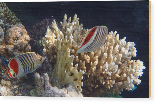 Red Sea Beauty 2 Wood Print