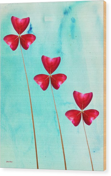 Red Shamrock Trio Wood Print