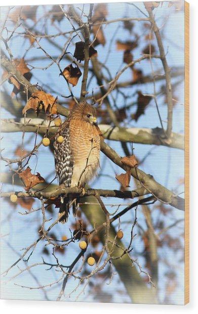 Red-shouldered Hawk - Img_7943 Wood Print