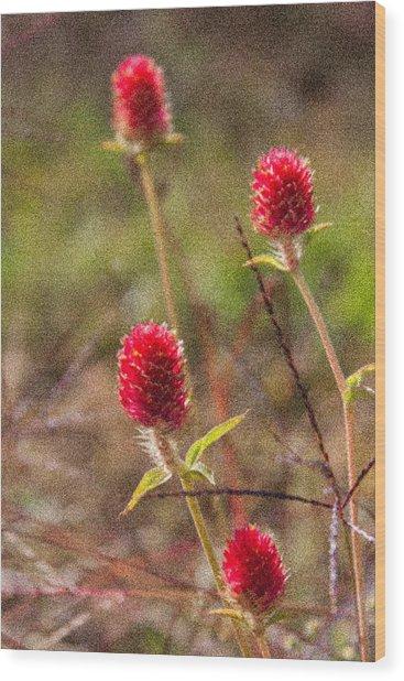 Red Spiky Flowers Wood Print by Karen Stephenson