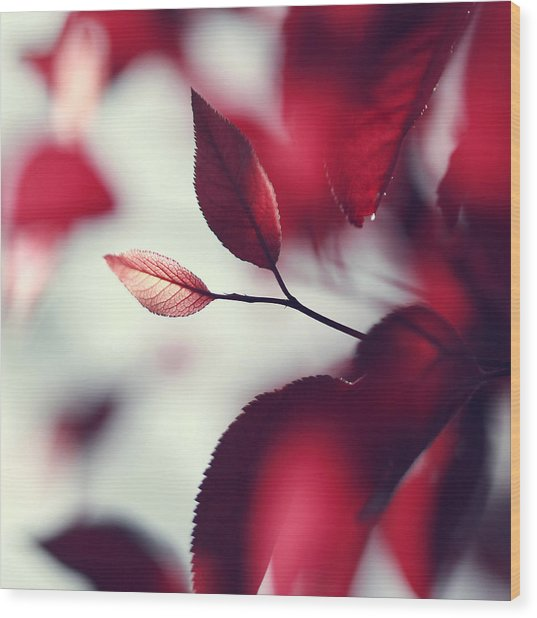 Red Spring Wood Print by Beata  Czyzowska Young
