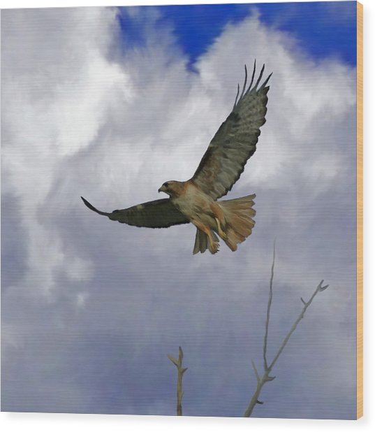 Red Tail Hawk Digital Freehand Painting 1 Wood Print