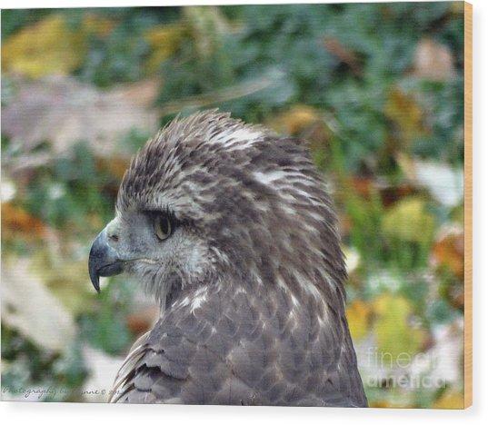 Red Tail Hawk Head Shot Wood Print