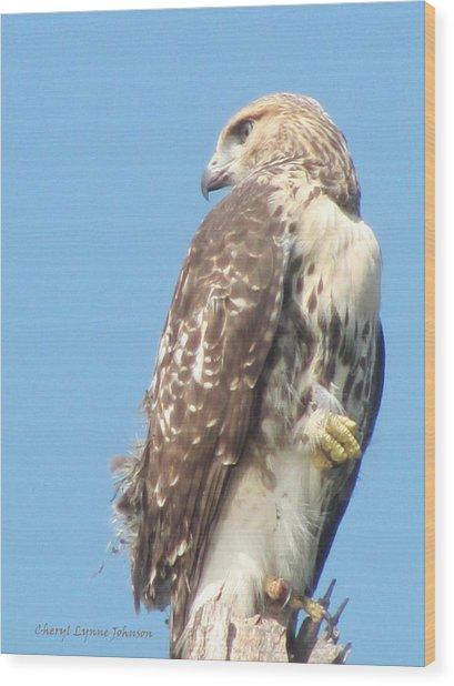 Red Tailed Hawk Wood Print by Cheryl Lynne  Leech-Johnson