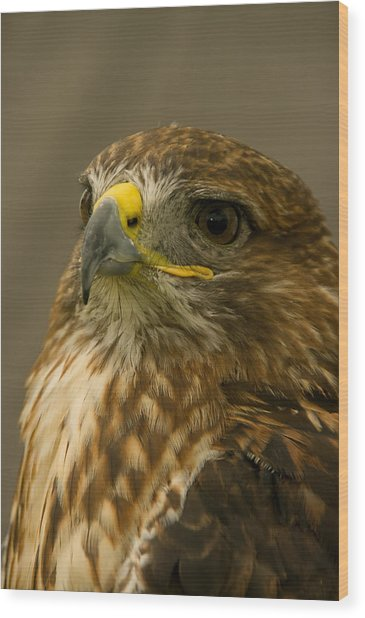 I'm So Proud - Red Tailed Hawk Wood Print