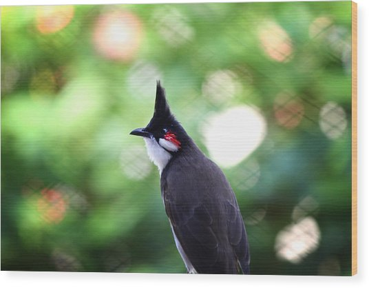 Red Whiskered Bulbul Wood Print by Kunal Ghate