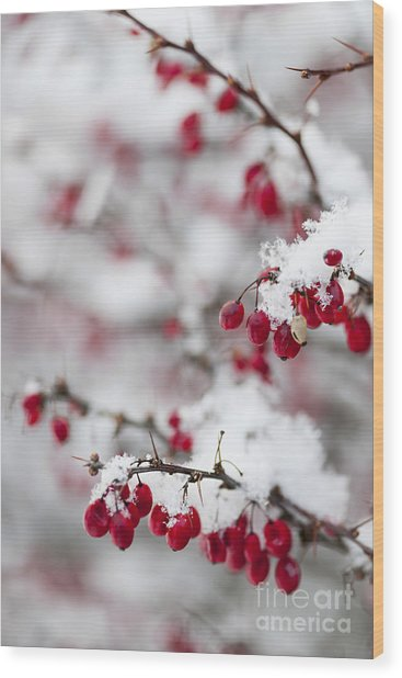 Red Winter Berries Under Snow Wood Print
