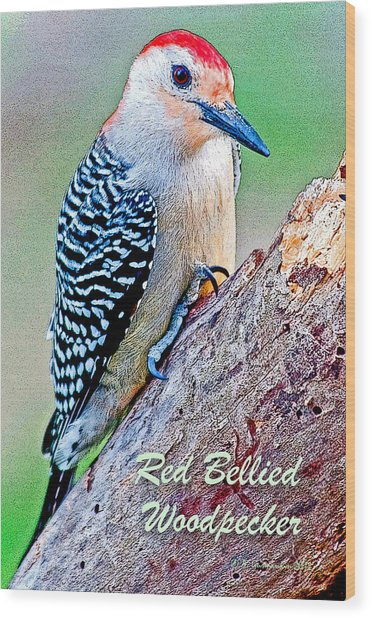 Redbellied Woodpecker Poster Image Wood Print by A Gurmankin
