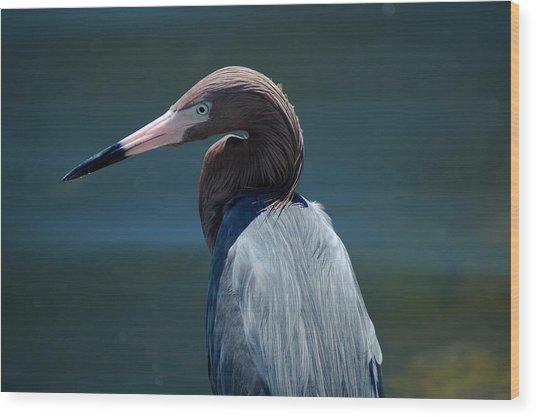Reddish Egret 3 Wood Print