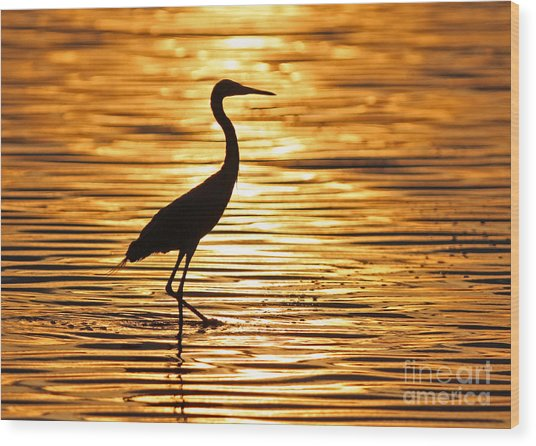 Reddish Egret At Sunset Wood Print