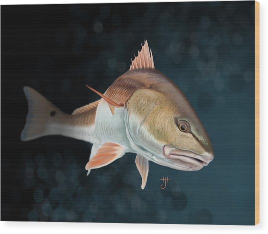 Redfish Inspection Wood Print
