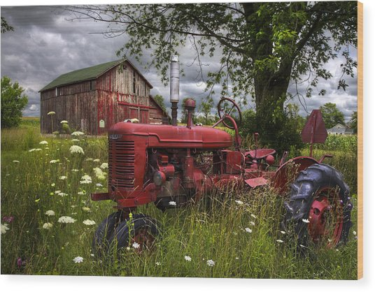 Reds In The Pasture Wood Print