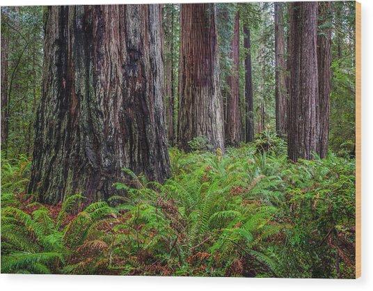 Redwood Sentinels Wood Print by Mike  Walker