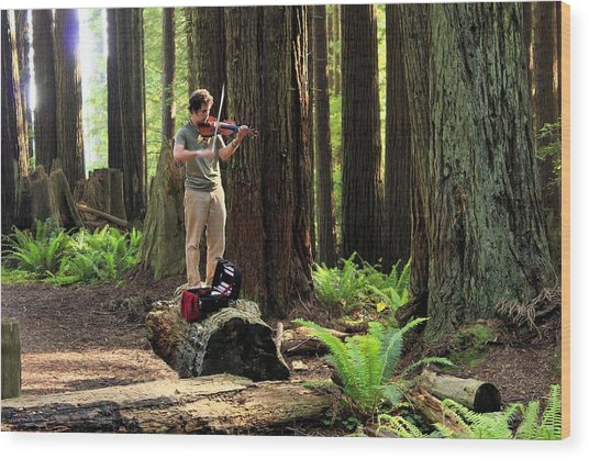Redwood Symphony   Wood Print
