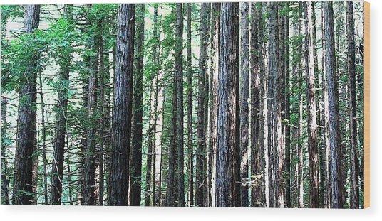 Redwoods 2 Wood Print by Greg Thiemeyer