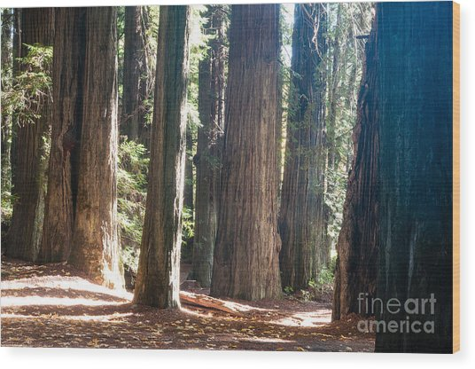 Redwoods 2.2843 Wood Print by Stephen Parker