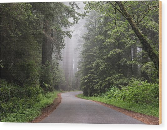 Redwoods In Northern California Wood Print