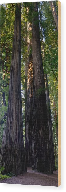 Redwoods Vertical Panorama Wood Print