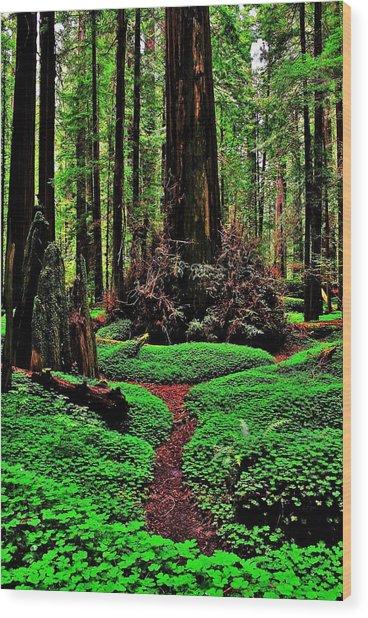 Redwoods Wonderland Wood Print