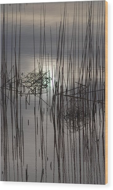 Reed Reflection 3 Wood Print by T C Brown