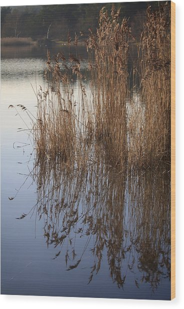 Reed Reflections Wood Print by Shirley Mitchell