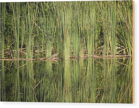 Reeds Of Reflection Wood Print