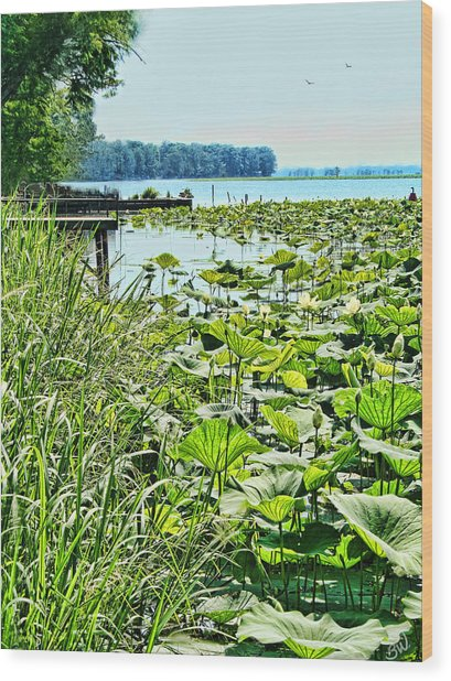 Reelfoot Lake Lilly Pads Wood Print