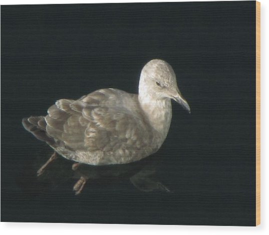 Refections Of A Gull Wood Print
