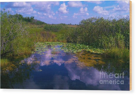 Reflecting In The Glades Wood Print