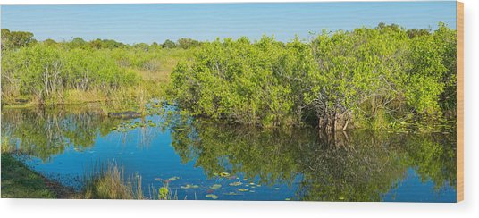 Reflection Of Trees In A Lake, Anhinga Wood Print