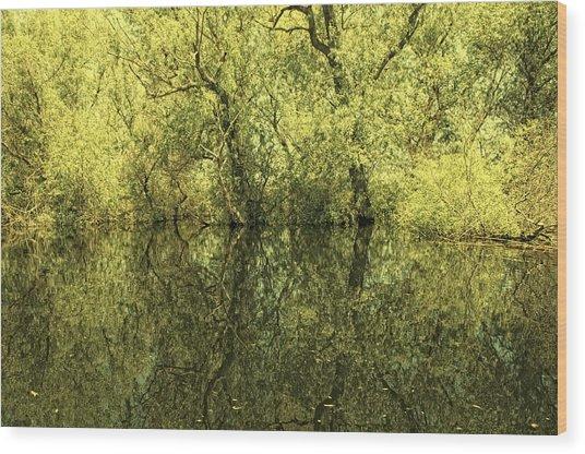 Reflections 5 Wood Print by Vessela Banzourkova